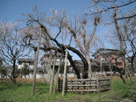 20080407 偕楽園4.JPG