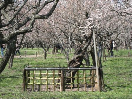 20080407 偕楽園6.JPG