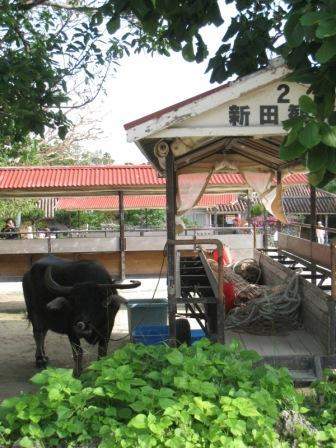 20081203 竹富島7.JPG