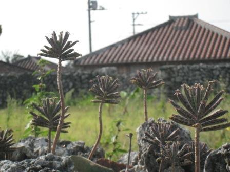 20081203 竹富島8.JPG